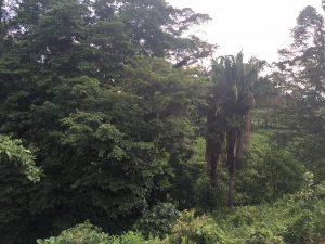 ministerio-casa-verde-new-project-4